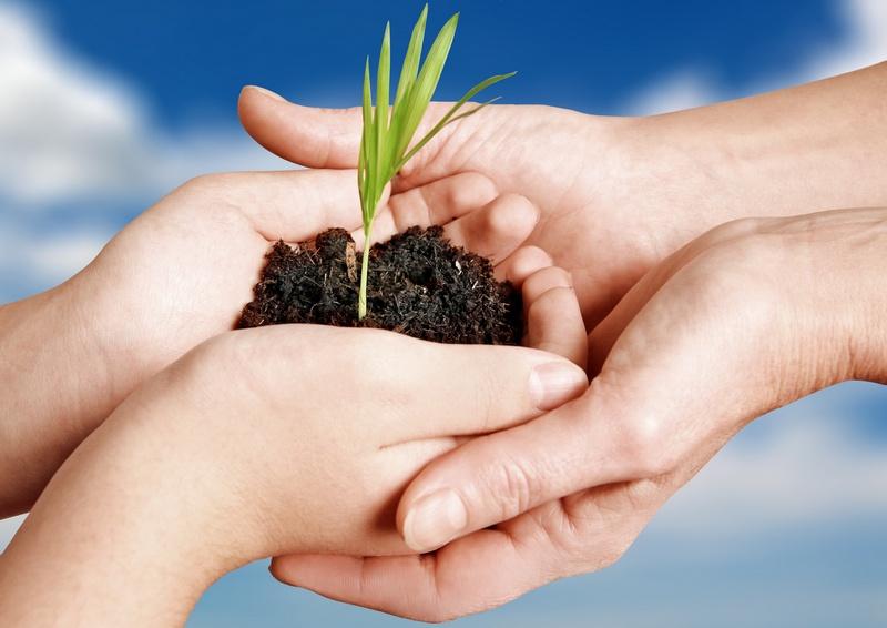Cuidar al que cuida parte 2 artritisguiadeayuda for Como cuidar las plantas